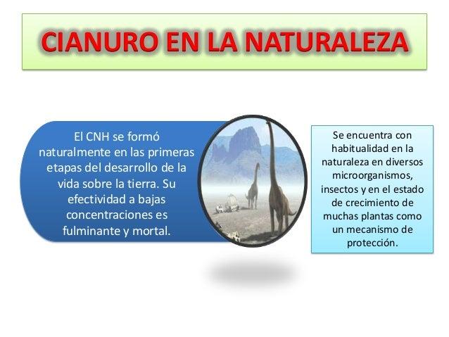 CIANURO EN LA NATURALEZA El CNH se formó naturalmente en las primeras etapas del desarrollo de la vida sobre la tierra. Su...