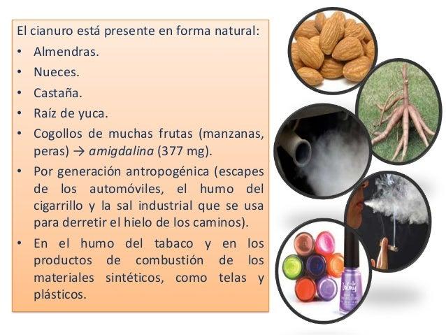 El cianuro está presente en forma natural: • Almendras. • Nueces. • Castaña. • Raíz de yuca. • Cogollos de muchas frutas (...