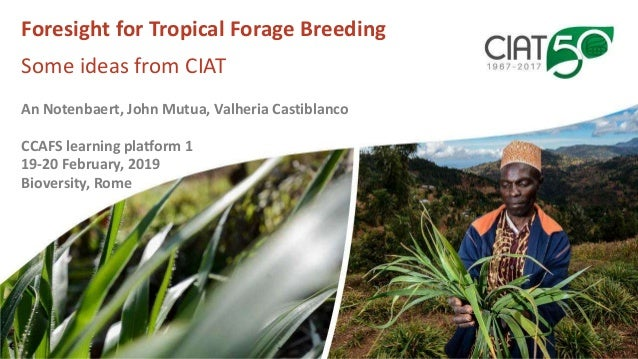 Foresight for Tropical Forage Breeding Some ideas from CIAT An Notenbaert, John Mutua, Valheria Castiblanco CCAFS learning...