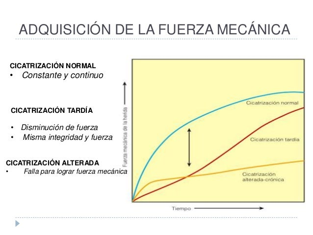 ADQUISICIÓN DE LA FUERZA MECÁNICA CICATRIZACIÓN NORMAL • Constante y continuo CICATRIZACIÓN TARDÍA • Disminución de fuerza...