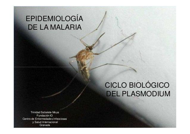EPIDEMIOLOGÍA  DE LA MALARIA                                     CICLO BIOLÓGICO                                     DEL P...
