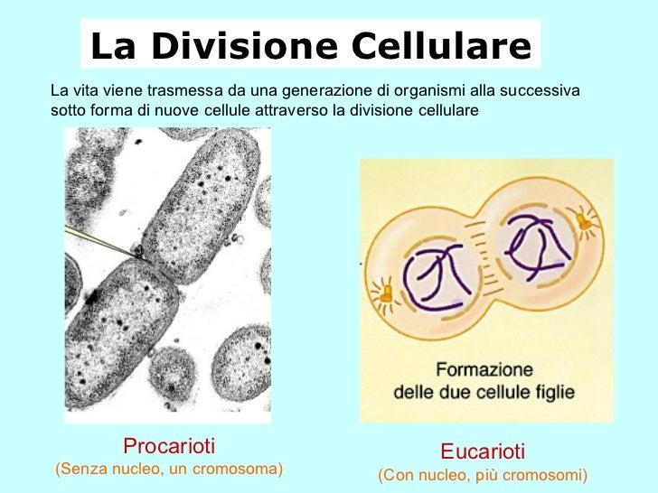 La Divisione Cellulare La vita viene trasmessa da una generazione di organismi alla successiva sotto forma di nuove cellul...