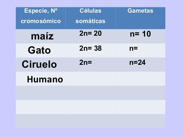 Comparación de la mitosis y la meiosis. En estos ejemplos, cada célula diploide tiene seis cromosomas (2n = 6). Las caract...
