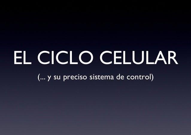 EL CICLO CELULAR  (... y su preciso sistema de control)