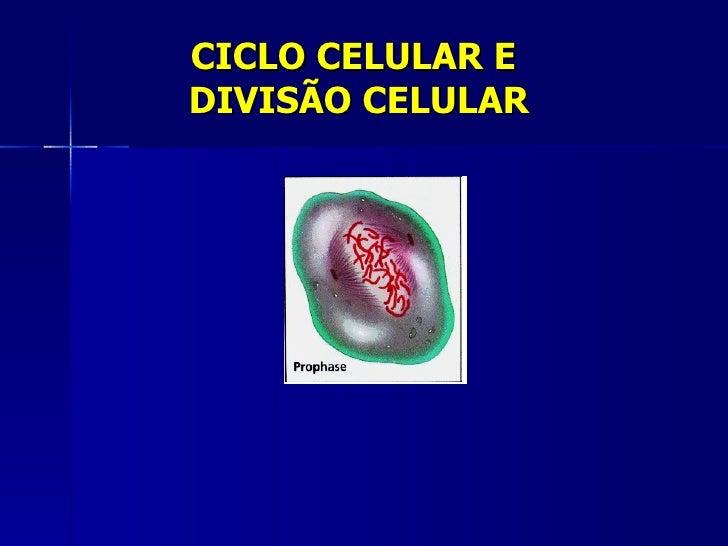 CICLO CELULAR EDIVISÃO CELULAR