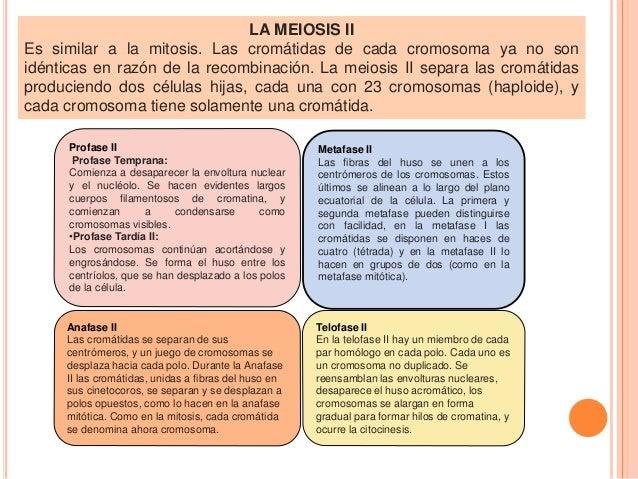 Ciclo celular mitosis meiosis for Importancia de la oficina wikipedia