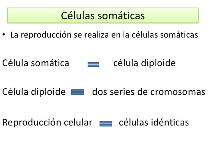 Reproduccion asexual celulas somaticas