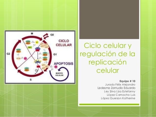 Ciclo celular y regulacion de la replicacion celular.ppt Slide 1