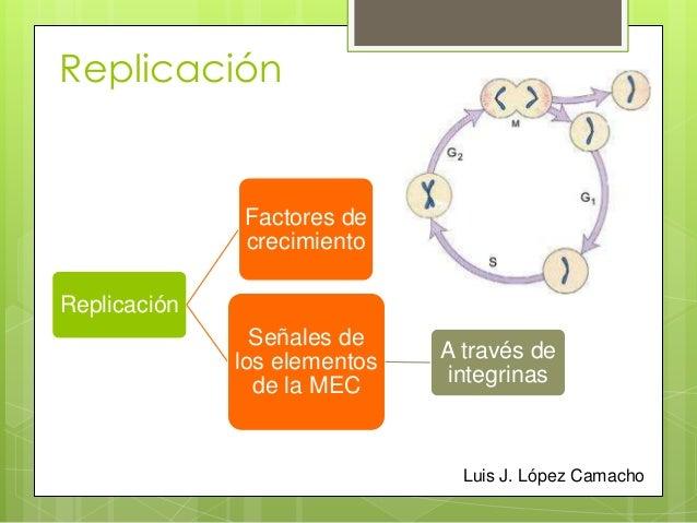Ciclo celular y regulacion de la replicacion celular.ppt Slide 2