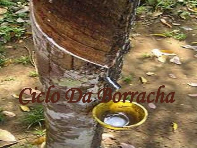 Ciclo Da Borracha