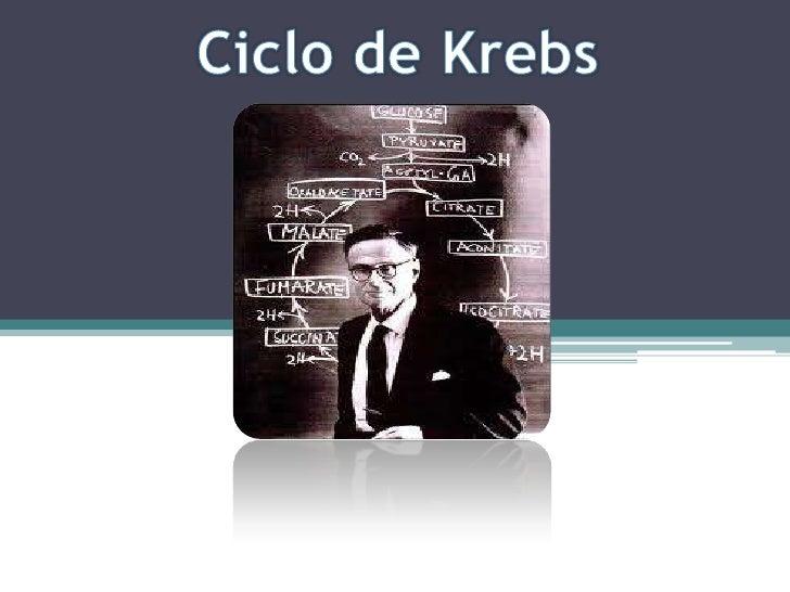 Ciclo de Krebs<br />