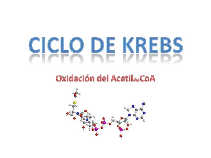 Objetivos del Ciclo de KrebsLos objetivos del Ciclo de Krebsson:• Oxidar acetil~CoA a CO2• Generar equivalentes de  reducc...