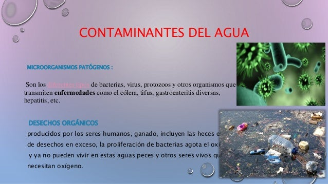 Ciclo del agua point for Peces que no necesitan oxigeno