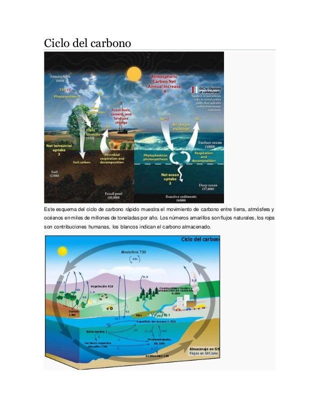 Ciclo del carbono Este esquema del ciclo de carbono rápido muestra el movimiento de carbono entre tierra, atmósfera y océa...