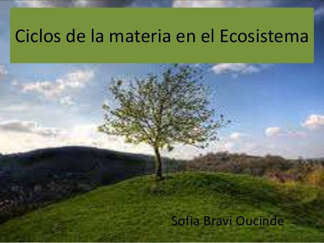 Ciclos de la materia en el Ecosistema Sofia Bravi Oucinde