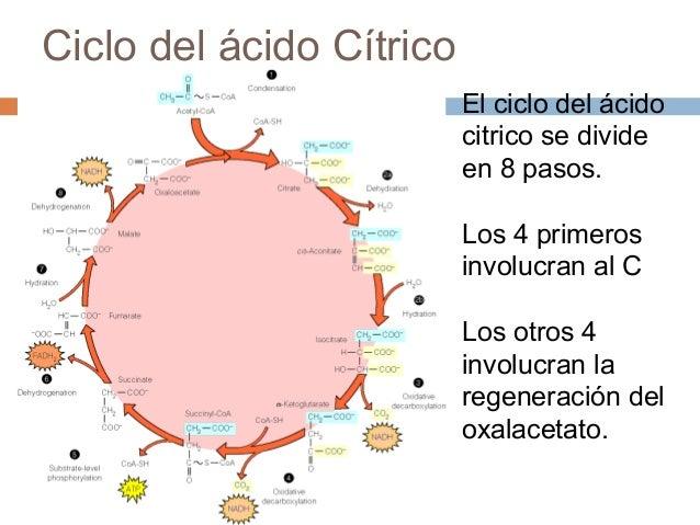vias anabolicas y catabolicas pdf