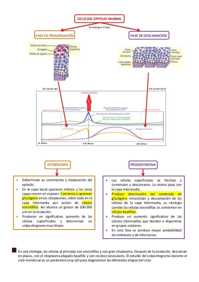 Lujoso Anatomía De Vigina Colección de Imágenes - Imágenes de ...