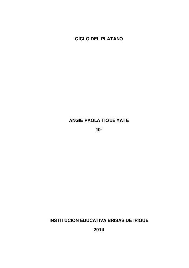 CICLO DEL PLATANO  ANGIE PAOLA TIQUE YATE  10º  INSTITUCION EDUCATIVA BRISAS DE IRIQUE  2014