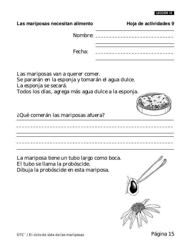 Ciclo de vida de la mariposa cuaderno de actividades