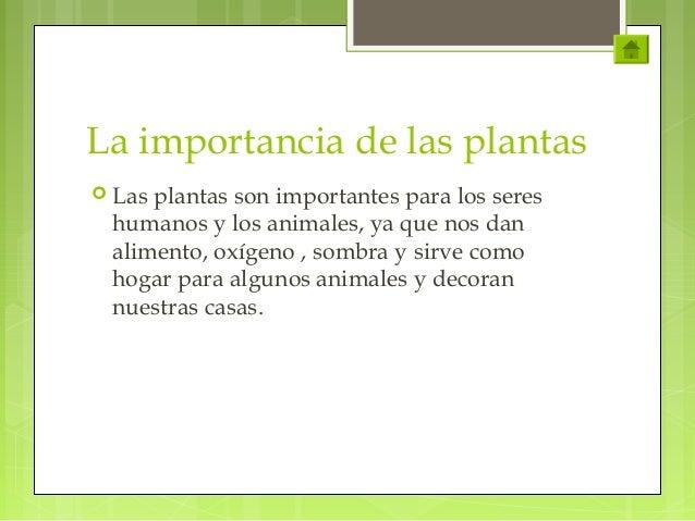 Ciclo de vida de plantas for Porque son importantes los arboles wikipedia