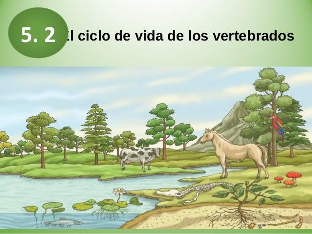 El ciclo de vida de los vertebrados5. 2