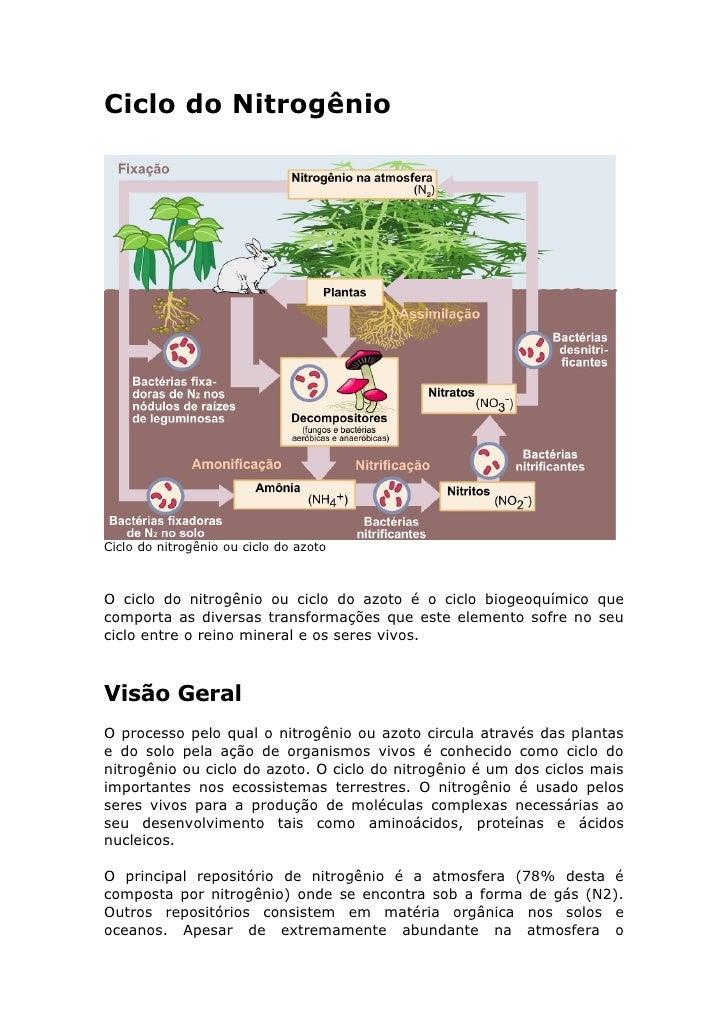 Ciclo do Nitrogênio     Ciclo do nitrogênio ou ciclo do azoto    O ciclo do nitrogênio ou ciclo do azoto é o ciclo biogeoq...