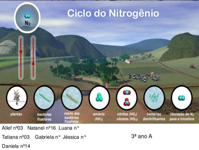 Ciclo do Nitrogênio  Allef nº03 Natanel nº16 Luana n°  Tatiana nº03 Daniela nº14  Gabriela n° Jéssica n°  3ª ano A