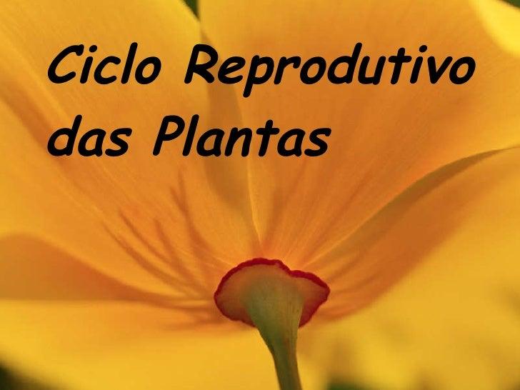 Ciclo Reprodutivo das Plantas