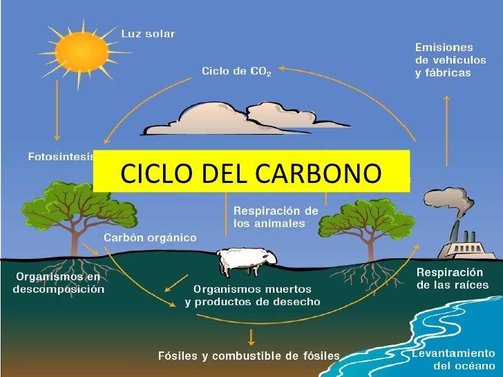 Ciclo Biogeoquimico Del Carbono Pdf