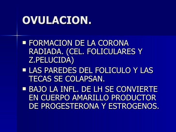 OVULACION. <ul><li>FORMACION DE LA CORONA RADIADA. (CEL. FOLICULARES Y Z.PELUCIDA) </li></ul><ul><li>LAS PAREDES DEL FOLIC...