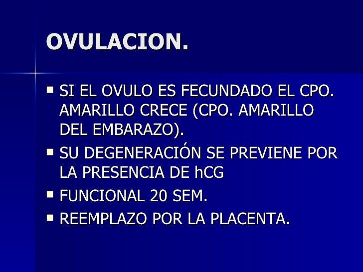 OVULACION. <ul><li>SI EL OVULO ES FECUNDADO EL CPO. AMARILLO CRECE (CPO. AMARILLO DEL EMBARAZO). </li></ul><ul><li>SU DEGE...