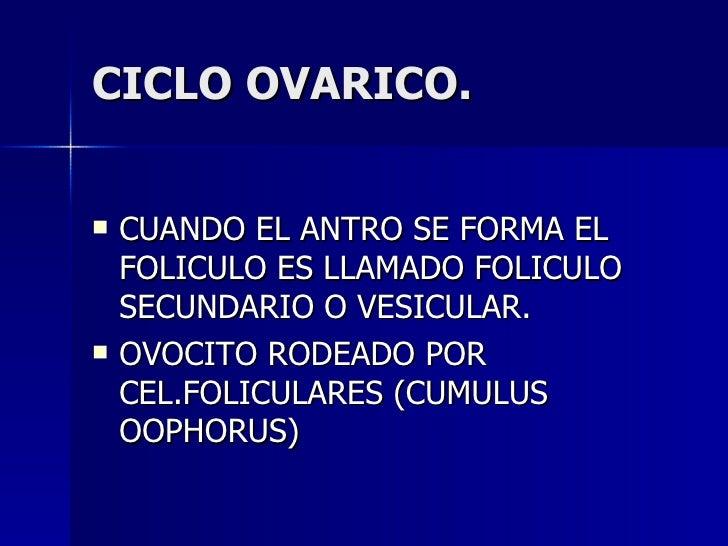 CICLO OVARICO. <ul><li>CUANDO EL ANTRO SE FORMA EL FOLICULO ES LLAMADO FOLICULO SECUNDARIO O VESICULAR. </li></ul><ul><li>...