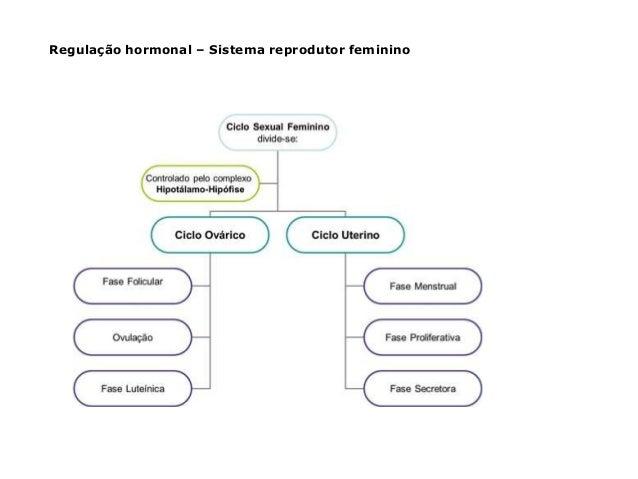 Regulação hormonal – Sistema reprodutor feminino
