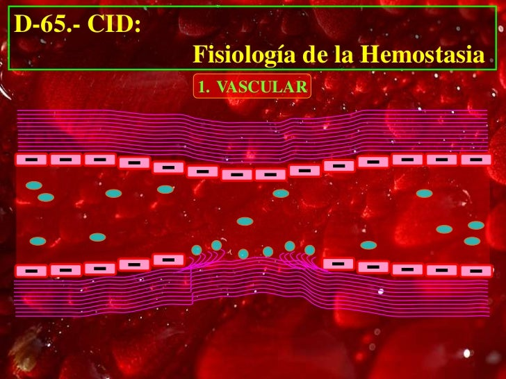 D-65.- CID:              Fisiología de la Hemostasia              1. VASCULAR