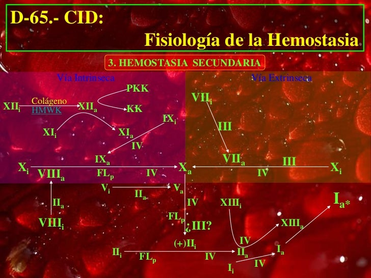 D-65.- CID:                                      Fisiología de la Hemostasia                             3. HEMOSTASIA SEC...