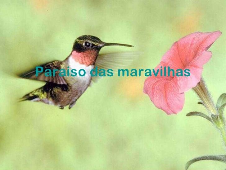 Paraiso das maravilhas