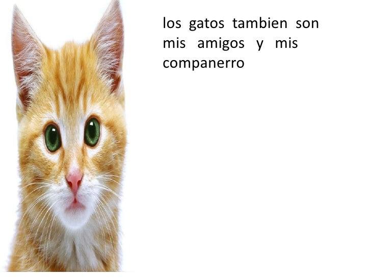• los gatos tambien sonCidi martin                mis amigos y mis                companerro