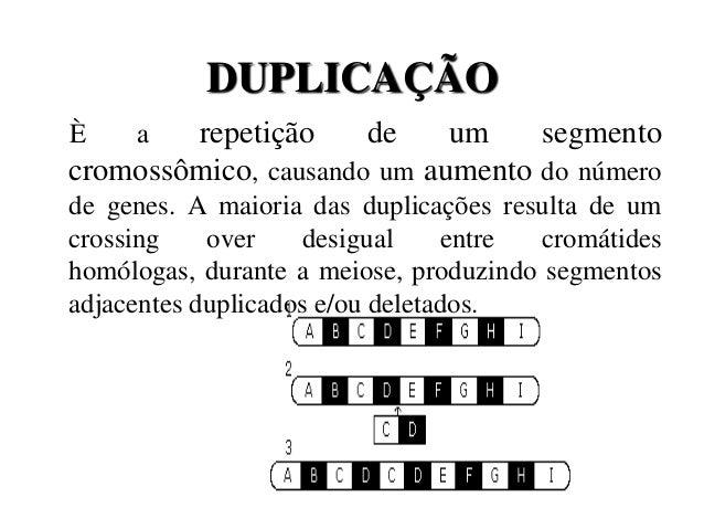 DUPLICAÇÃOÈ a repetição de um segmentocromossômico, causando um aumento do númerode genes. A maioria das duplicações resul...