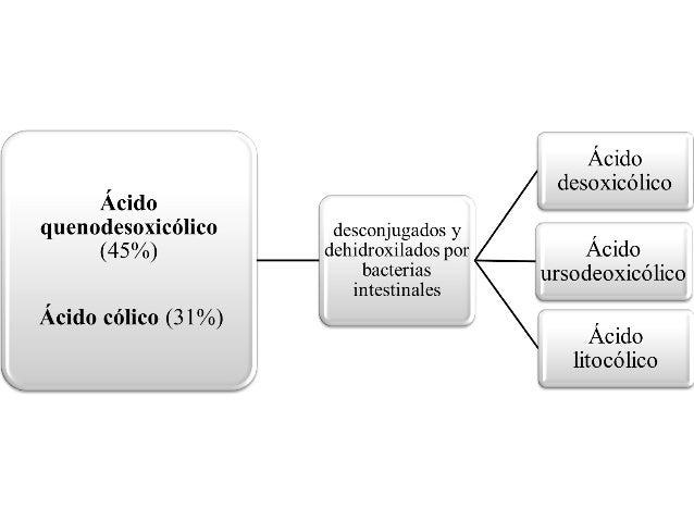 Fisiopatología Colelitiasis - Colecistitis Litiasis Coledocolitiasis Perforación de la Vesícula - Fistula Bilioenterica Co...