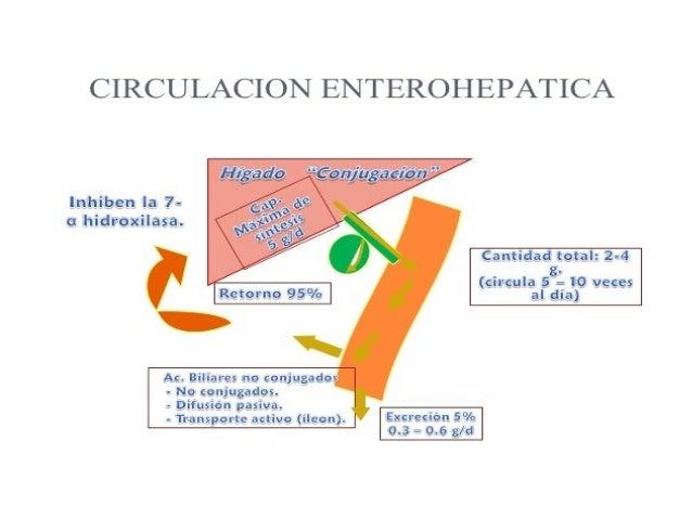 Ácido cólico El tratamiento con ácido cólico por vía oral estimula la secreción de bilis y favorece el flujo normal de los...