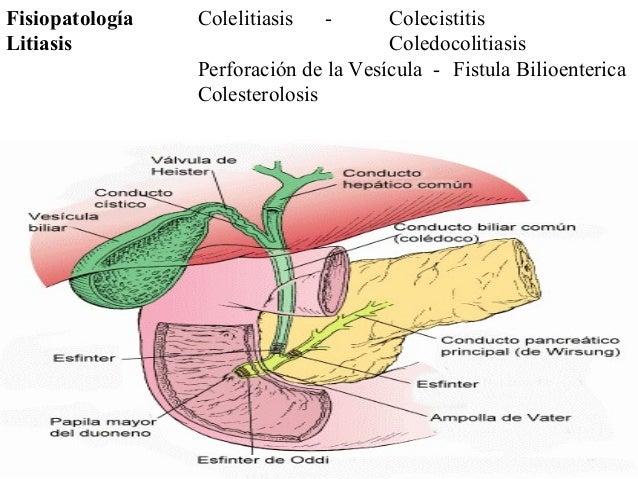Ácido Cólico (ALCA BOL) Indicaciones: •Mal funcionamiento de la vesícula. •Inflamación crónica de la vesícula. •Digestione...