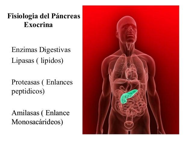 Fisiologia del Páncreas Exocrina Enzimas Digestivas Lipasas ( lipidos) Proteasas ( Enlances peptidicos) Amilasas ( Enlance...