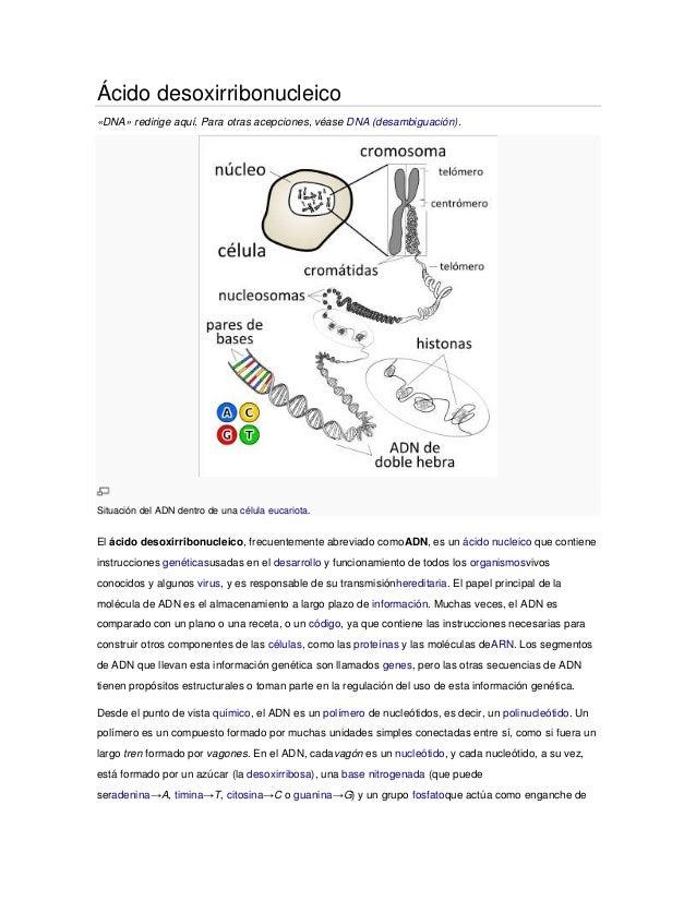 Ácido desoxirribonucleico «DNA» redirige aquí. Para otras acepciones, véase DNA (desambiguación). Situación del ADN dentro...