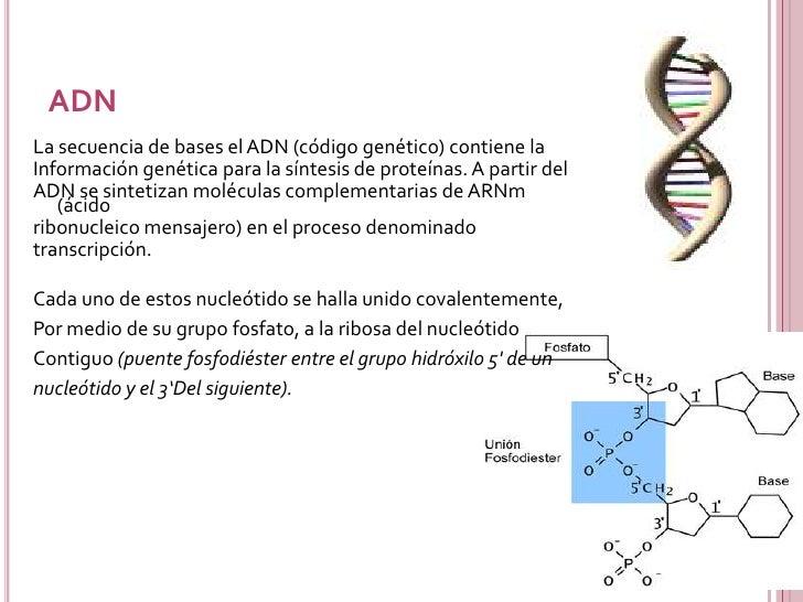 Acidos Nucleicos Slide 12