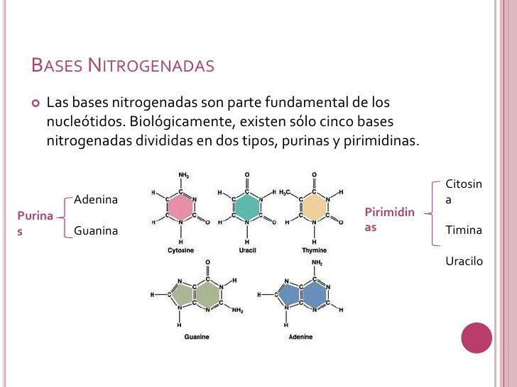 Acidos Nucleicos Slide 9