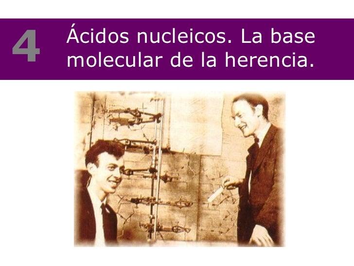 Ácidos nucleicos. La base molecular de la herencia. 4
