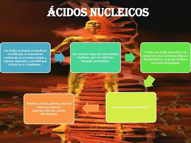 ÁCIDOS NUCLEICOS<br />