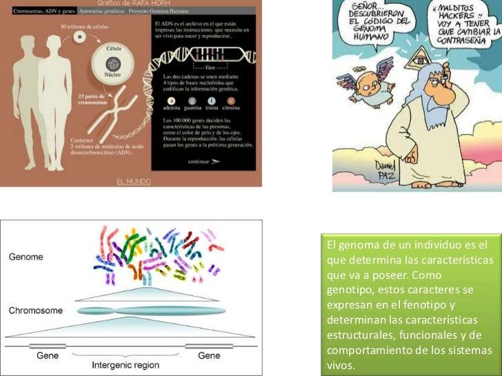 Funciones del DNA<br />Síntesis de proteínas<br />transcripción<br />traducción<br />DNA<br />RNA<br />Proteína<br />retro...
