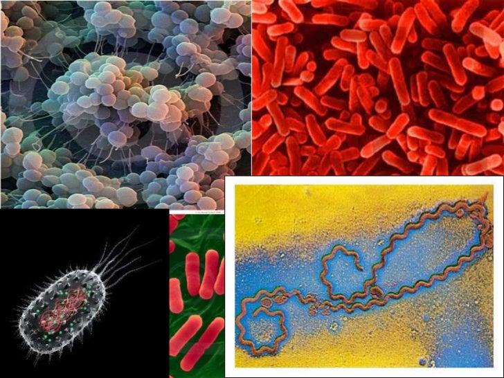 Importancia del DNA<br />Síntesis de proteínas<br />transcripción<br />traducción<br />DNA<br />RNA<br />Proteína<br />ret...