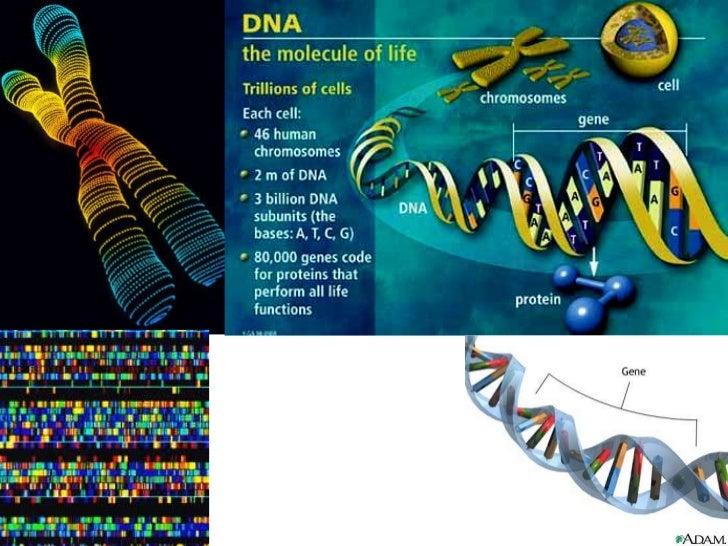 Cromosoma procarionte<br />